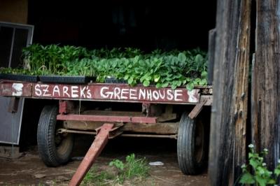 szarek greenhouses