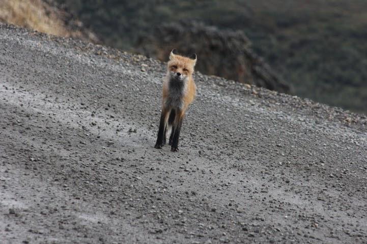 FOX[2]