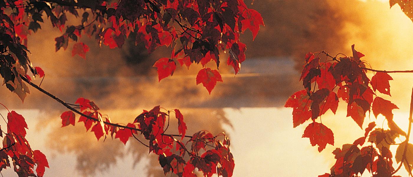 Autumn | Syracuse New Times