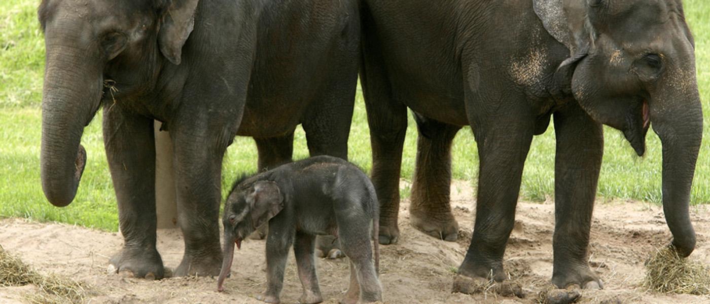 Baby elephant at Syracuse zoo